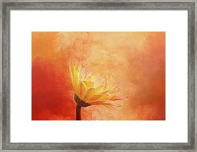 Fiery Beauty Framed Print by Terry Davis