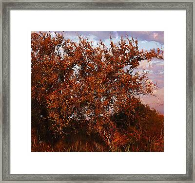Framed Print featuring the digital art Fiery Elm Tree  by Shelli Fitzpatrick