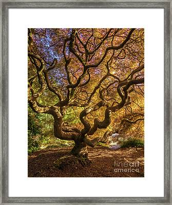 Fiery Fall Colors Tree Of Life Framed Print by Mike Reid