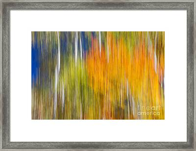 Fiery Fall Framed Print by Elena Elisseeva