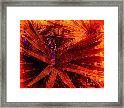Fiery Palm Framed Print by Susanne Van Hulst