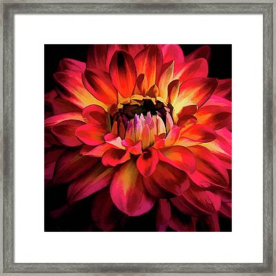 Framed Print featuring the photograph Fiery Red Dahlia by Julie Palencia