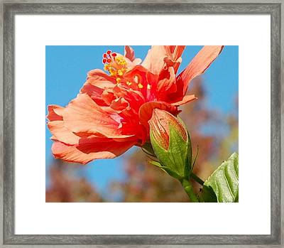 Fiesta Time Framed Print by Jean Booth