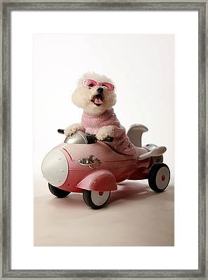 Fifi Is Ready For Take Off In Her Rocket Car Framed Print