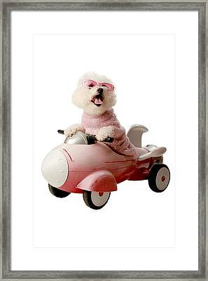 Fifi Is Ready For Take Off  Framed Print by Michael Ledray