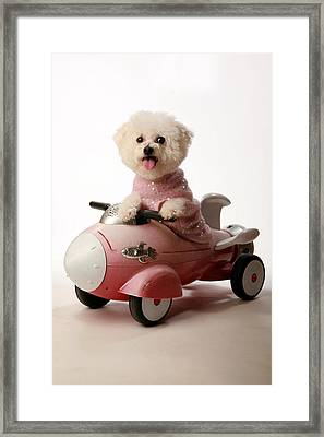 Fifi Ready For Take Off Framed Print by Michael Ledray
