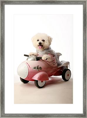 Fifi The Bichon Frise And Her Rocket Car Framed Print by Michael Ledray