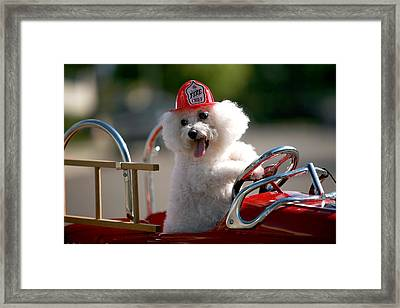 Fifi The Fire Dog Framed Print by Michael Ledray