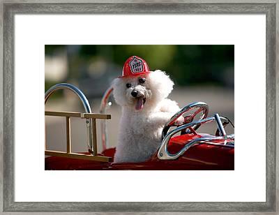 Fifi The Fire Dog Framed Print