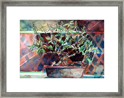 Fig Bonsai Tree Framed Print by Mindy Newman