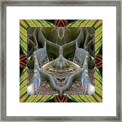 Fig Tree Ally Framed Print by Bell And Todd