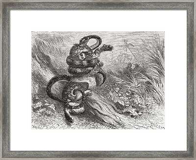 Fight Between A Jaguar And A Boa. From Framed Print