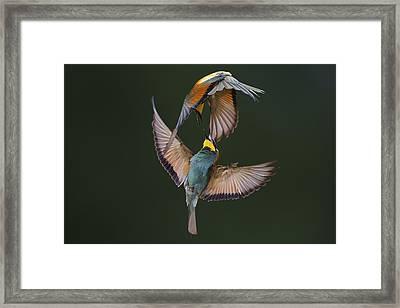 Fight Between Rainbows Framed Print by Marco Redaelli