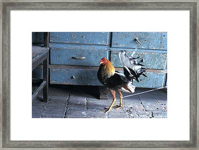 Fighting Cock Framed Print