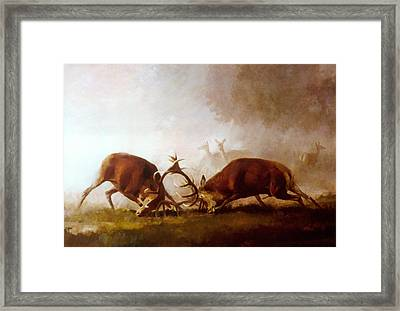 Fighting Stags II. Framed Print