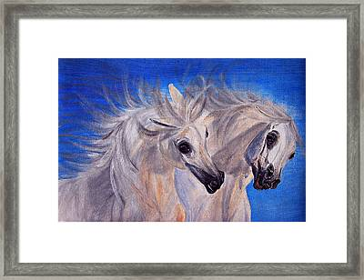 Fighting Stallions Framed Print