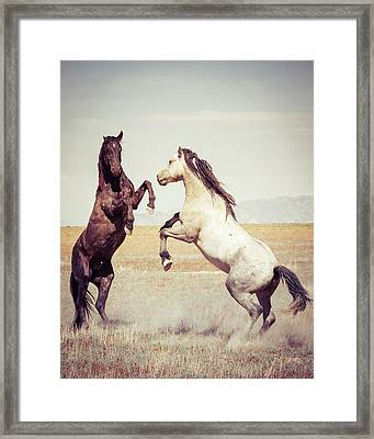 Framed Print featuring the photograph Fighting Stallions by Mary Hone