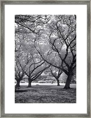 Fighting Trees Framed Print by Sean Davey
