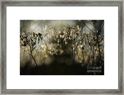 Figment Of Imagination 6 Framed Print
