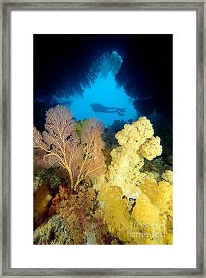 Fiji Underwater Framed Print by Dave Fleetham - Printscapes