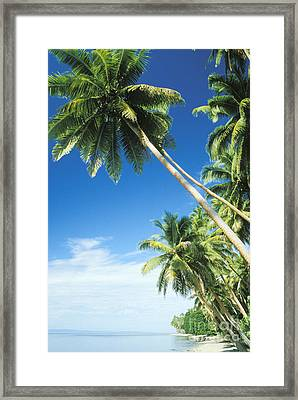 Fiji, Vanua Levu Framed Print by Peter Stone - Printscapes