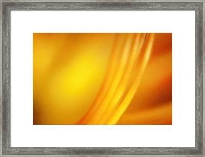 Filament Framed Print by Scott Norris
