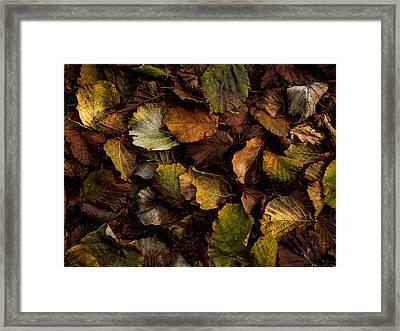 Filbert Leaf Pattern Framed Print by Jean Noren