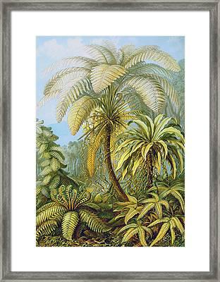 Filicinae Ferns Framed Print by Ernst Haeckel