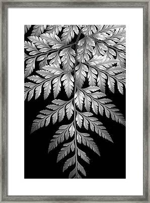 Filigree Fern II Framed Print