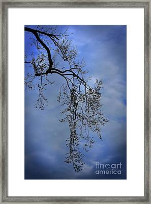 Framed Print featuring the photograph Filigree From On High by Skip Willits