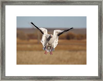 Final Approach Framed Print