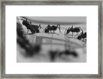 Final March Framed Print by Joshua Ball