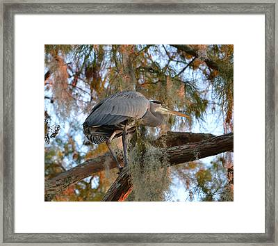Final Resting Place For The Night Framed Print by rd Erickson