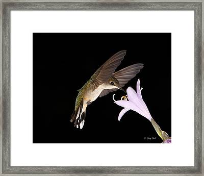 Final Snack Framed Print by Gerry Sibell