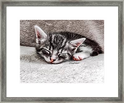 Finally Asleep  Copyright Mary Lee Parker 17  Framed Print