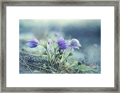 Finally Spring Framed Print by Priska Wettstein