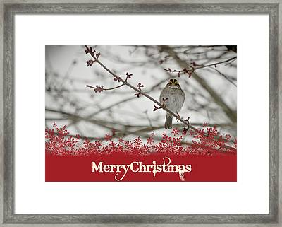 Framed Print featuring the mixed media Finch Christmas by Trish Tritz