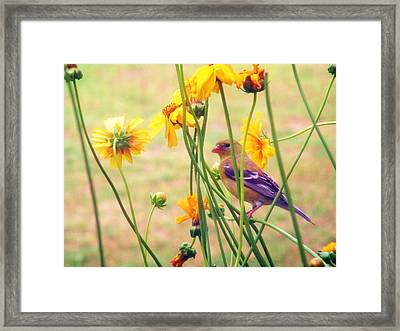 Finch Framed Print by D R TeesT