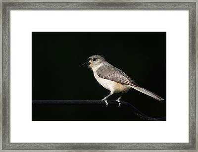 Framed Print featuring the photograph Finch by Heidi Poulin