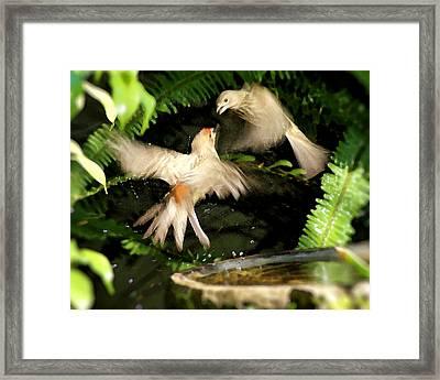 Finch Spat Framed Print by Ellen Lerner ODonnell