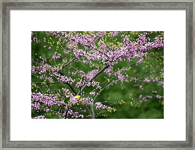 Finches Among The Buds Framed Print by David Bearden