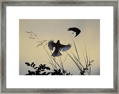 Finches Silhouette With Leaves 3 Framed Print