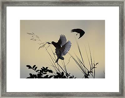 Finches Silhouette With Leaves 4  Framed Print