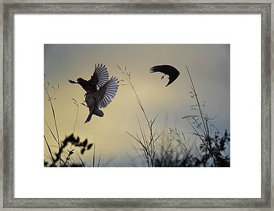 Finches Silhouette With Leaves 5 Framed Print