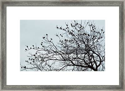 Finches To The Wind Framed Print