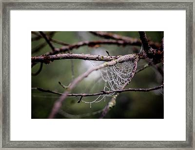 Find Comfort In The Chaos Framed Print