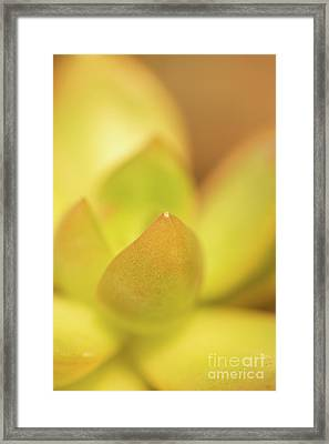 Find Focus In Nature Framed Print by Ana V Ramirez