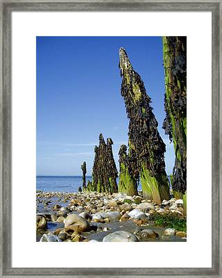 Find Me A Monster Framed Print