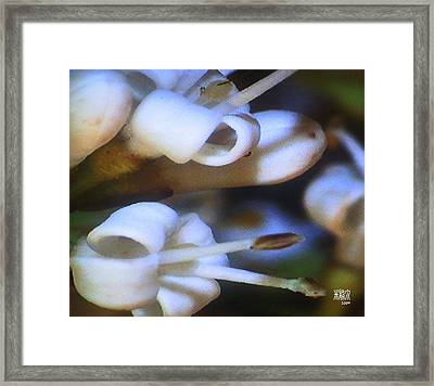 Find The Bug Framed Print by Michele Caporaso