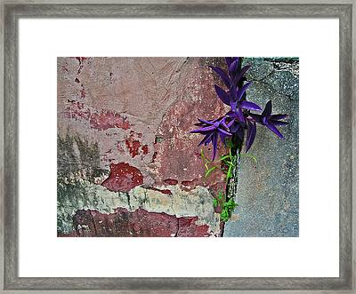Finding Beauty Everywhere Framed Print